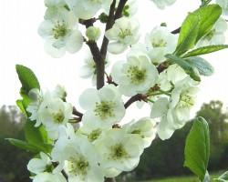 Pavasaris - 3. foto