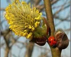 Gaidam pavasari - 2. foto