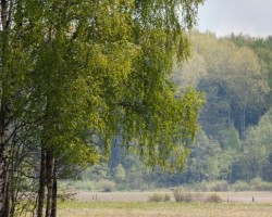 Latvijas ārēs - 2. foto