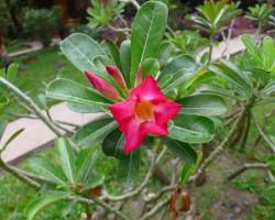 Eksotiskie ziedi