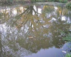 Atspulgi ūdenī - 2. foto