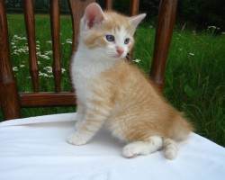 kaķu meitene 2