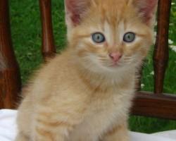 kaķu meitene 3