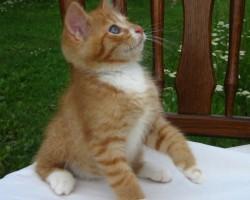 kaķu meitene 4