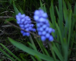 kas man pavasarī uzziedējis - 2. foto