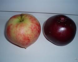 āboli, vīnogas, ogas - 3. foto