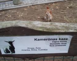 zoo - 1. foto