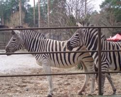 zoo - 2. foto