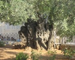 Izraelā. - 2. foto