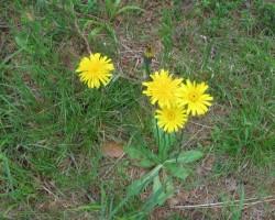 Meža ziedi,ogas un... - 3. foto
