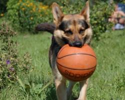 Hektoram patīk basketbols.:)