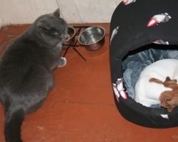 Kamēr nogurums nomāc, kaķis bauda haļavu .... :))) / cik var zivis ēst / :DDD