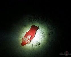 Spāņu dejotājs tumsā! :)