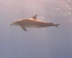 Tas speciāli - tai , kas gribēja delfīnu !! :D