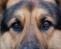 Un ja vē suņi mācētu runāt .......