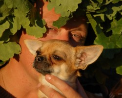 Suns sunim draugs ...      :DDDD