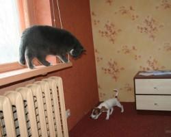 Ja kaķis būtu badā .............. kurš būtu zacene !??? :D