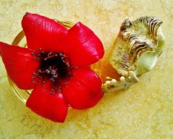 Zieds un gliemežvāks