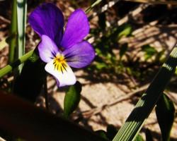Bij pavasars...
