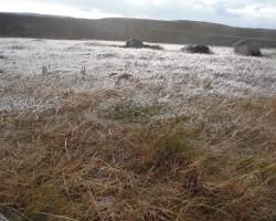 Ledus pļava
