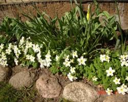 Un atkal pavasaris - 1. foto