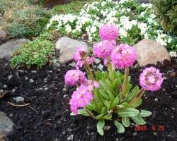 Un atkal pavasaris - 3. foto