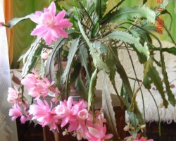 Un atkal pavasaris - 2. foto