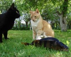 kaķiem lieli brīnumi!  ; )