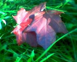 Krāsainas lapas. - 3. foto