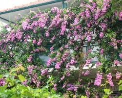 Taizeme ziedos