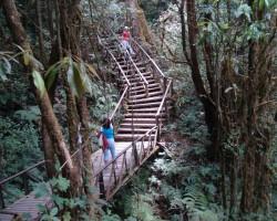 Taizemes džungļu takas
