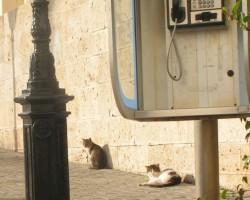 Trīs no kaķu armādas
