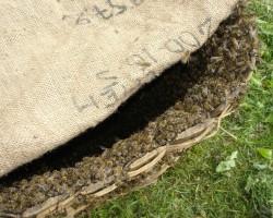 Ar bitēm nekad neko nevar zināt....