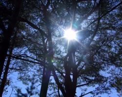 Gaujas krastā Carnikavā - 1. foto
