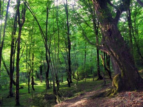 Meži un ūdeņi