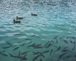 Plitvicas ezeri-10
