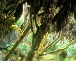 Lietus mežos - 2. foto