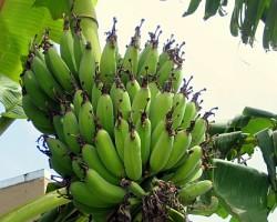 Dažādi tropiskie augļi - 1. foto