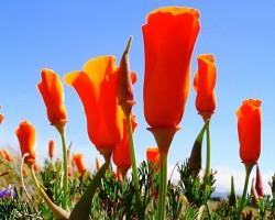Dažādas krāsas - Oranžā - 1. foto