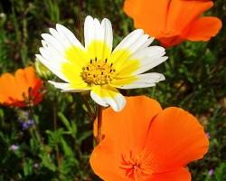 Dažādas krāsas - Oranžā - 2. foto