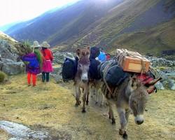 Kalnu iemītnieki - 2. foto