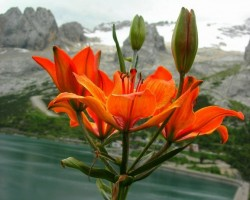 Dažādas krāsas - Oranžā - 3. foto