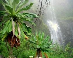 Džungļi - 3. foto