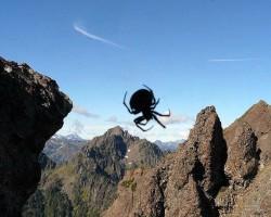 Insekti & zirnekļi - 2. foto