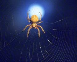 Insekti & zirnekļi - 3. foto