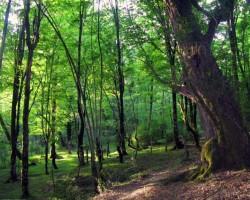 Meži un ūdeņi - 1. foto