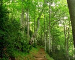Meži un ūdeņi - 2. foto