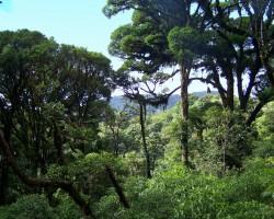 Džungļi - 2. foto