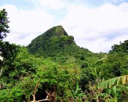 Džungļi - 1. foto