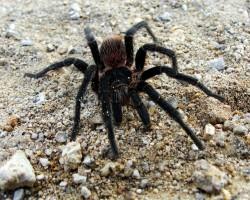 Insekti & zirnekļi - 1. foto